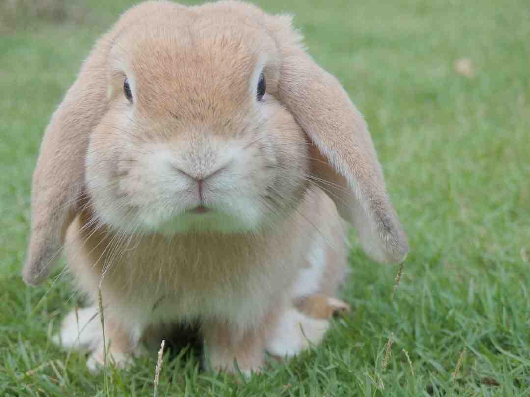 Bad Bunny : Fortune, Salaire, Parcours Et FAQ